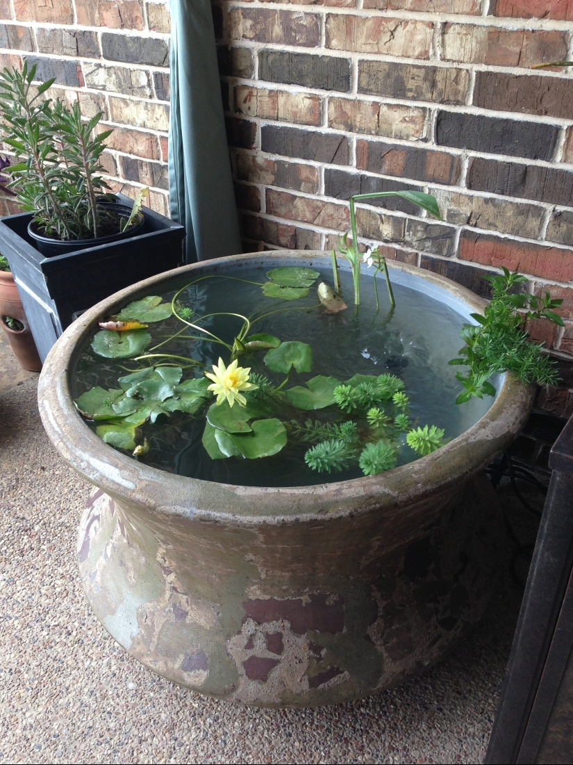 How To Build A Container Pond